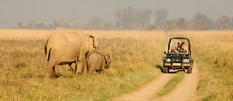 corbett_safari